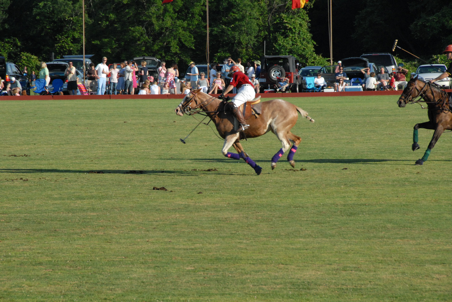 Polo action shot
