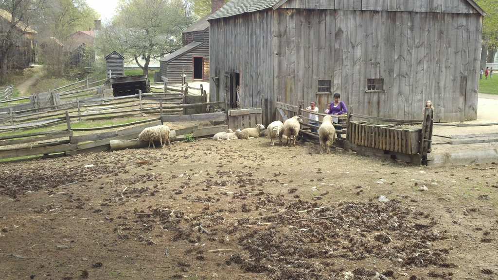 Sheep in OSV