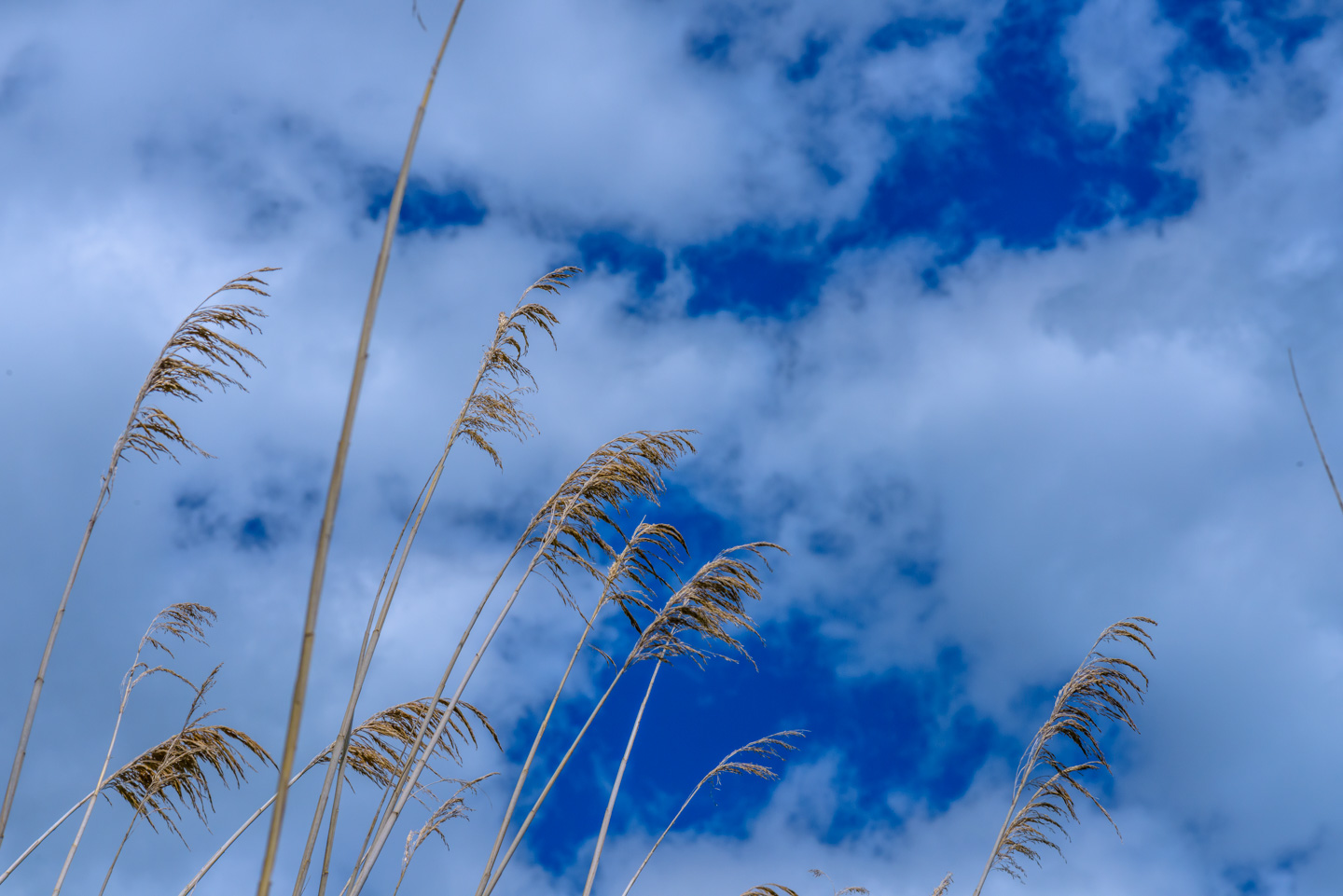 Marsh grasses with clouds